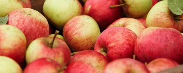 Tout pour ma pomme