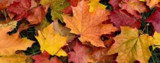 Fermeture d'automne